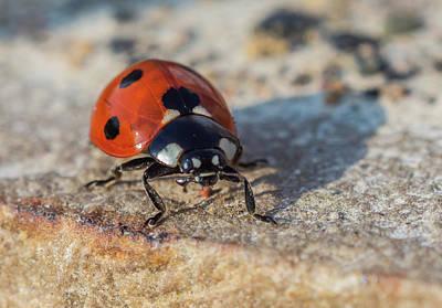 Photograph - Ladybird On Concrete by Scott Lyons