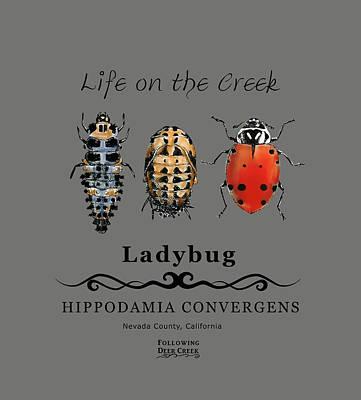 Digital Art - Ladybug Life Cycle by Lisa Redfern