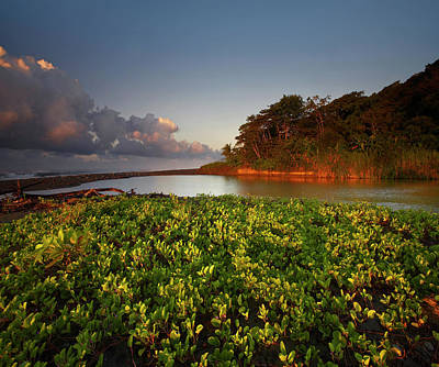 Photograph - Lagoon Near Coastline, Corcovado by Tim Fitzharris/ Minden Pictures