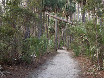 Photograph - Lagoon Trail by Patrick M Lynch