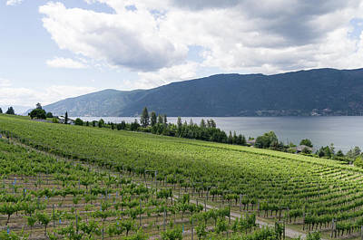 Lovely Lavender - Lake Country British Columbia winery 3 by Bob Corson