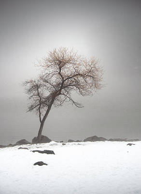 Photograph - Lake Cuyamaca Tree In Snow by William Dunigan