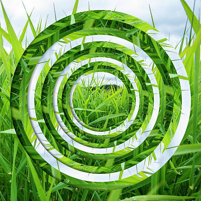 Royalty-Free and Rights-Managed Images - Lake Grass Circles by Pelo Blanco Photo