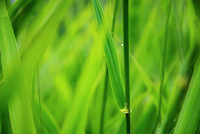 Royalty-Free and Rights-Managed Images - Lake Grass Raindrop by Pelo Blanco Photo