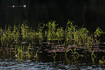 Photograph - Lake Grass by Robert Potts