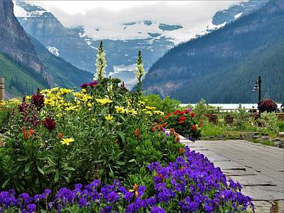 Photograph - Lake Louise Flowers by Joan Stratton