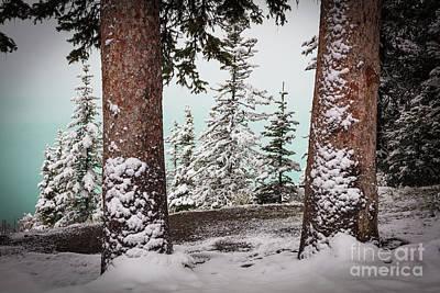 Photograph - Lake Louise Trees by Inge Johnsson