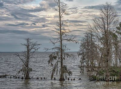 Photograph - Lake Mountrie - Cypress Tree's Winter Solitude by Dale Powell