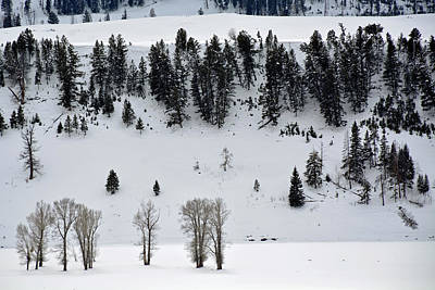 Photograph - Lamar Valley Winter In Yellowstone by Bruce Gourley