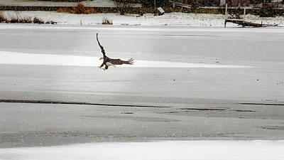 Photograph - Landing Spot by Onyonet  Photo Studios