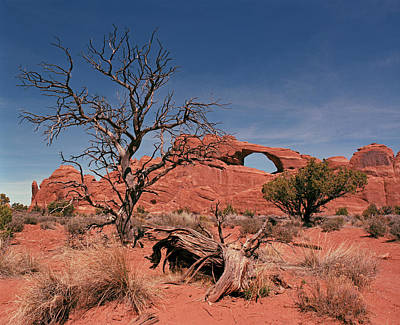 Photograph - Skyline Arch by Tom Daniel