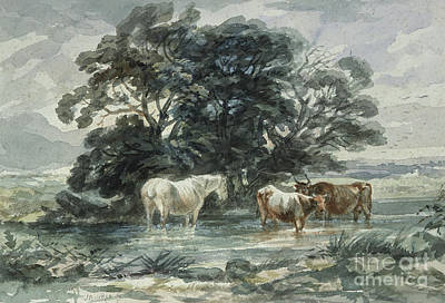 Painting - Landscape, Two Cows And A Horse Standing In Water by John Barker