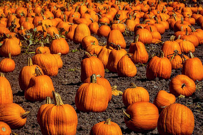 Photograph - Large Abundance Of Pumpkins by Garry Gay