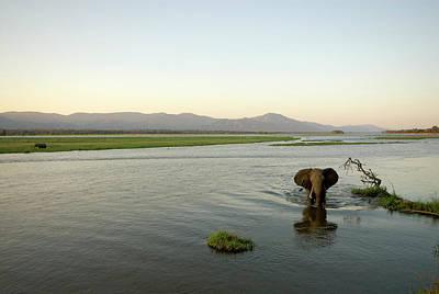 Photograph - Large Bull Elephant Loxodonta Africana by Christopher Scott