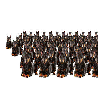 Doberman Wall Art - Photograph - Large Group Of Dobermans On White by Thomas Northcut