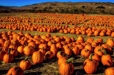 Photograph - Large Pumpkin Field by Garry Gay