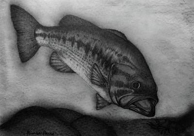 Drawings Royalty Free Images - Largemouth Bass Royalty-Free Image by Michael Panno