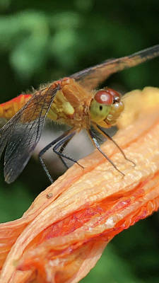 Digital Art - Larry The Dragonfly by Cindy Greenstein