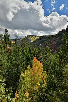 Photograph - Last Dollar Road Descending Into Sawpit Co by Ray Mathis