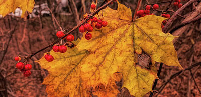 Photograph - Last Of The Fall Colors by Jeff Folger