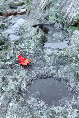 Photograph - Last To Fall by Dan Carmichael