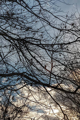 Outerspace Patenets Rights Managed Images - Late Afternoon Clouds Sky and Trees Royalty-Free Image by Robert Ullmann