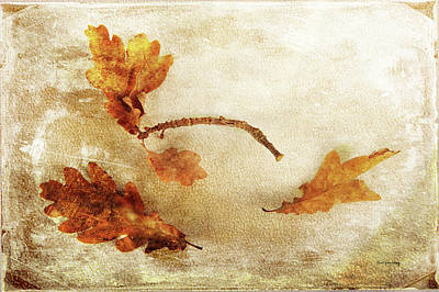 Photograph - Late Late Fall by Randi Grace Nilsberg