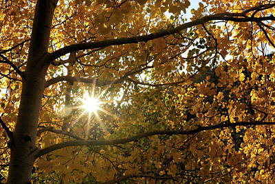 Photograph - Late Summer Sun Through Fall Foliage by Tony Hake