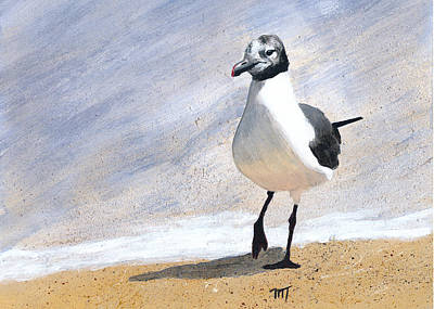 Painting - Laughing Gull by Mary Elizabeth Thompson