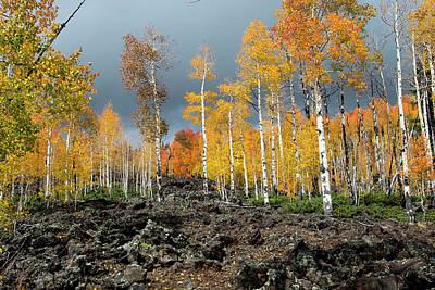 Photograph - Lava Road by Michael Monahan