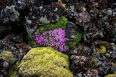 Photograph - Lava Rocks And Flowers by Tom Singleton