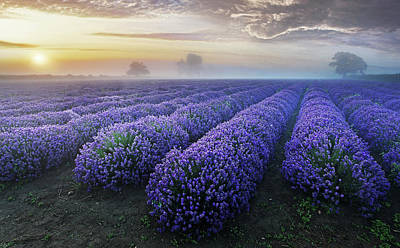 Photograph - Lavender Dawn by Sandra Kreuzinger