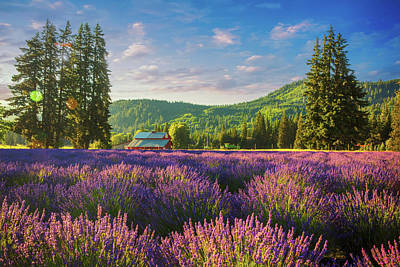 Photograph - Lavender Field  by Emmanuel Panagiotakis