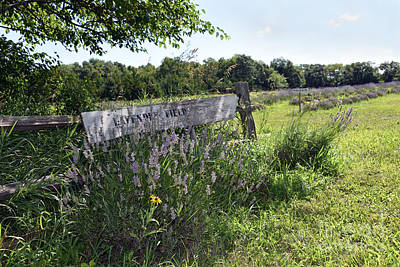 Beach House Signs - Lavender Field Sign by Catherine Sherman