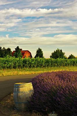 Photograph - Lavender Field, Walla Walla by Danita Delimont
