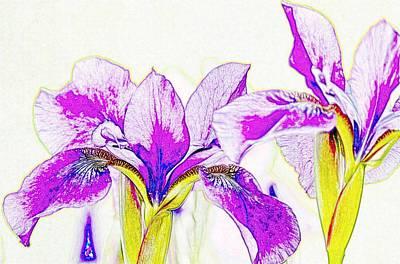 Photograph - Lavender Irises by Susan Rydberg