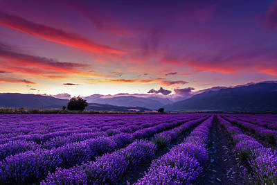 Mountain Royalty-Free and Rights-Managed Images - Lavender Season by Evgeni Dinev