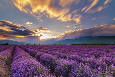 Photograph - Lavender Sun by Evgeni Dinev