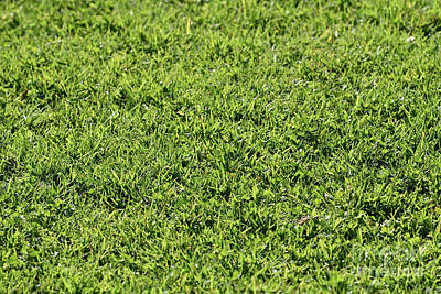 Photograph - Lawn Grass by George Atsametakis