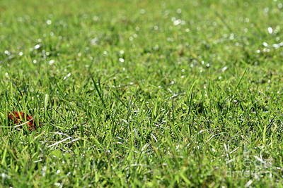 Photograph - Lawn Grass II by George Atsametakis