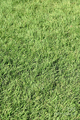 Photograph - Lawn Grass Iv by George Atsametakis