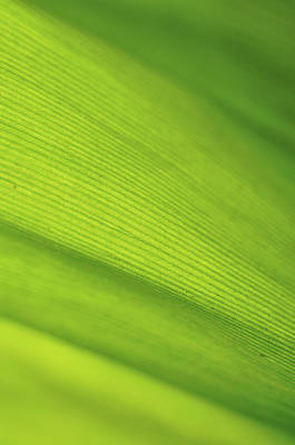 Photograph - Leaf Absract by Entienou