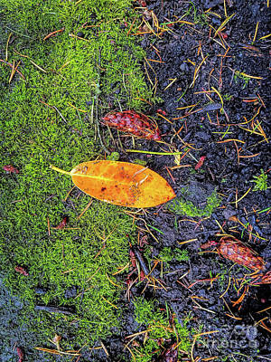 Photograph - Leaf And Mossy by Jon Burch Photography