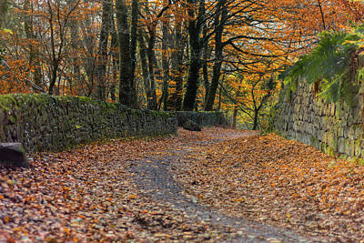 Photograph - Leaf Covered Road by Scott Lyons