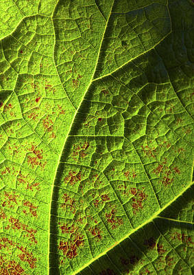 Photograph - Leaf Detail by Garden Gate magazine