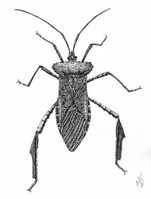 Drawing - Leaf Footed Bug by Marie Stone Van Vuuren