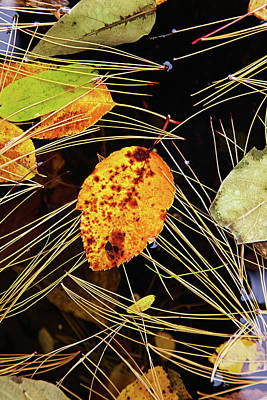 Photograph - Leaf In Pond by Garden Gate magazine