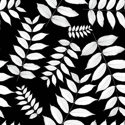 Photograph - Leaf Pattern Black And White by Christina Rollo