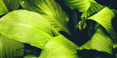Photograph - Leafy Greens by ProPeak Photography