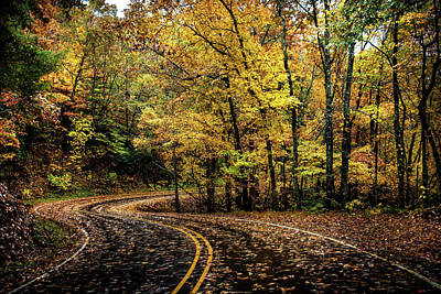 Photograph - Leafy Road by Greg Mimbs